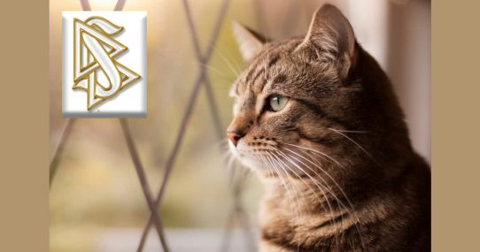 """Highest Level Of Scientology Revealed To Be """"House Cat"""""""