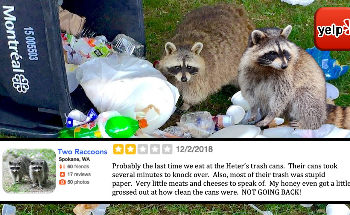 Family Devastated By Raccoons' 2-Star Review Of Their Trash