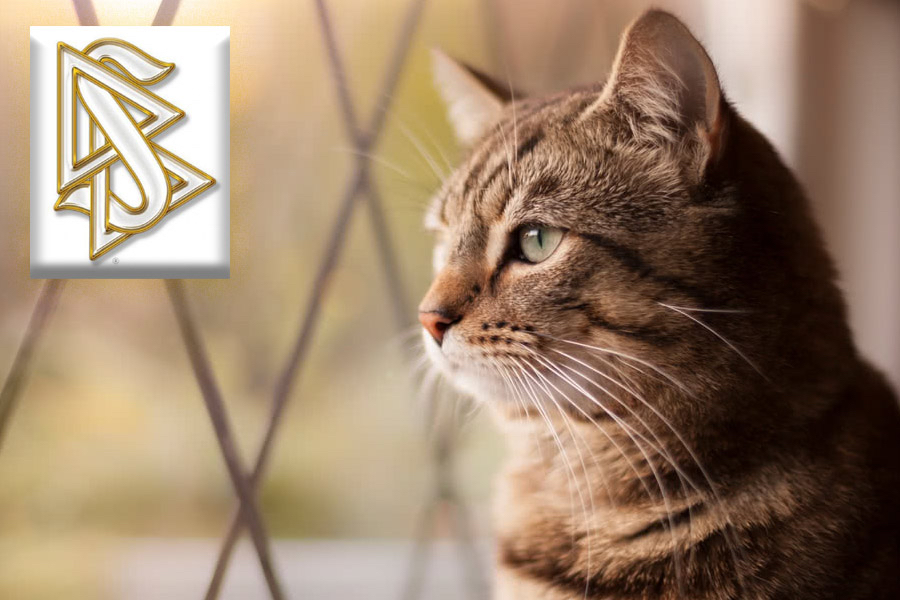 "Highest Level Of Scientology Revealed To Be ""House Cat"""