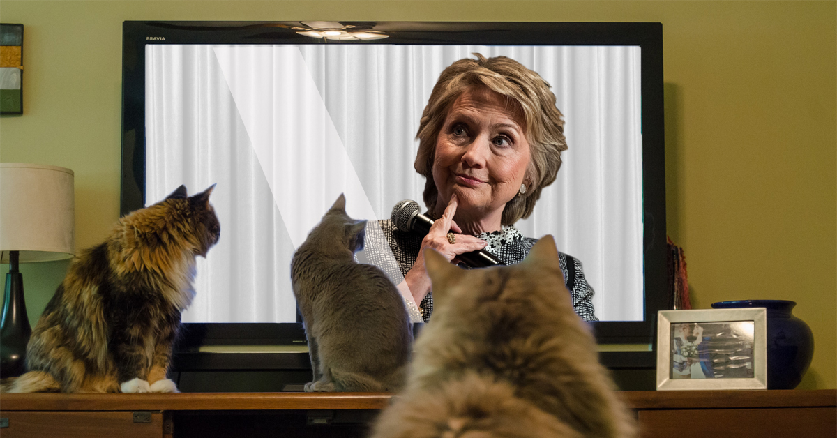 "Local House Cats Marvel at Hillary's: ""I Want in the Race! —Actually, I Don't—But Now I Do!"" Routine"