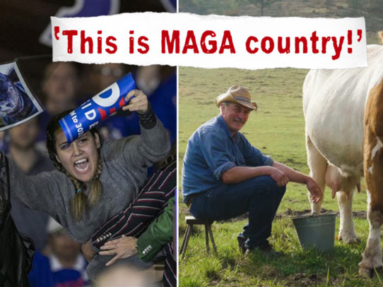 Anti-Dairy Activists: Farmers Are Abusing Cows While Yelling 'This Is MAGA Country!'