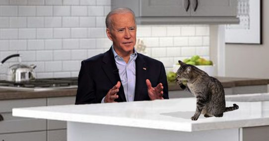 Joe Biden Accidentally Wastes Beautifully Articulate Speech On House Cat