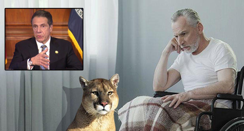 Media Praises Cuomo On Decision To Send Cougars Into Nursing Homes