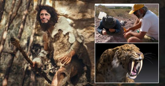 Paleontologists Find Evidence Showing Dr. Fauci's Ancestors Kept Everyone In Caves After Sabertooth Sighting