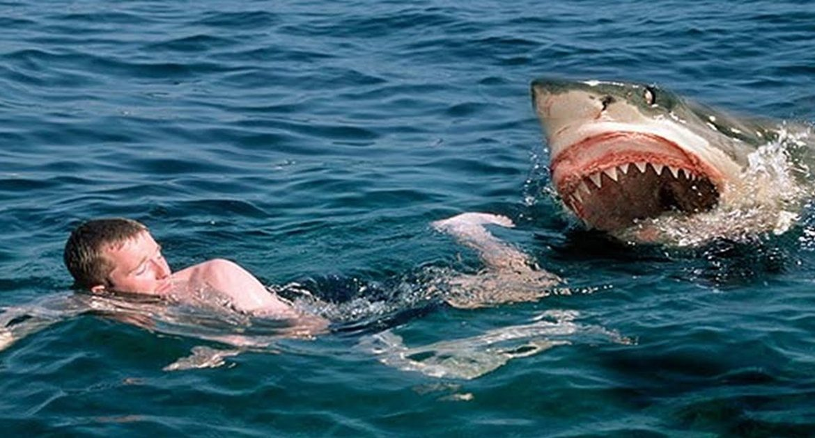 Local Man Devoured By Mostly Peaceful Shark California Officials Say