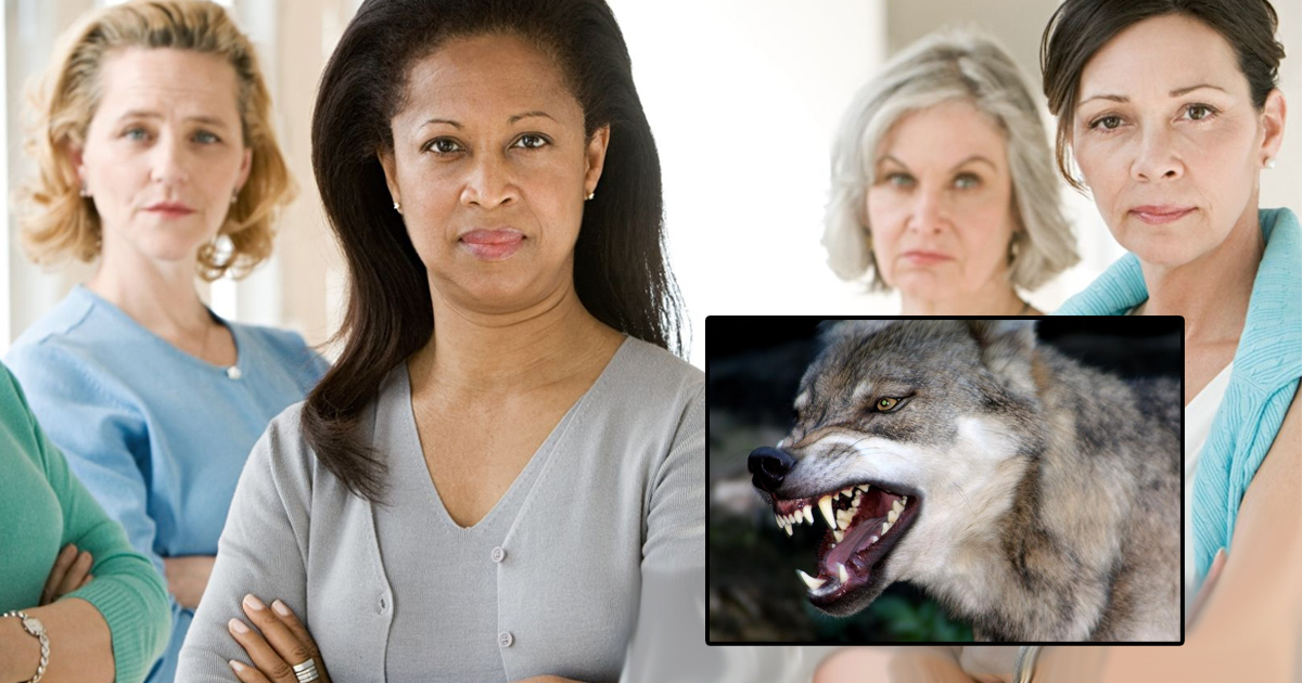 Teachers Unions: School Permanently Cancelled After Wolf Attacks Spike To .0002%