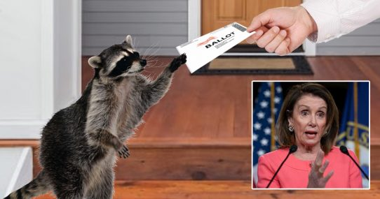 Democrats Scoff At Suggestion That Vote-By-Raccoon Is Unreliable