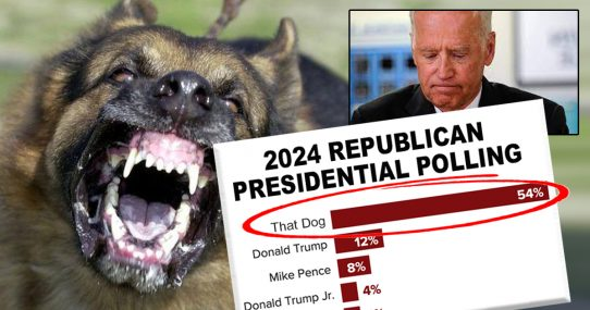 Biden's Dog Who Keeps Biting Everyone At The White House Takes Massive Lead In 2024 GOP Polling