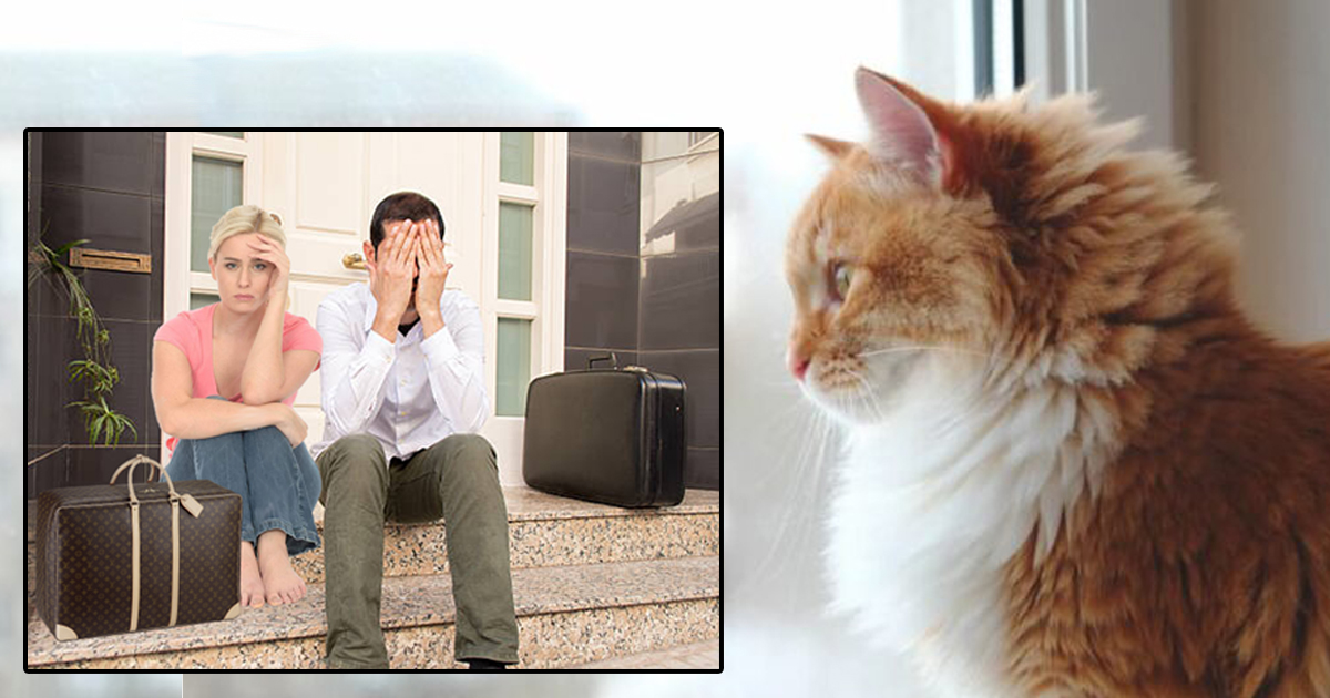 Family Evicted After House Cat Identifies As Home Owner