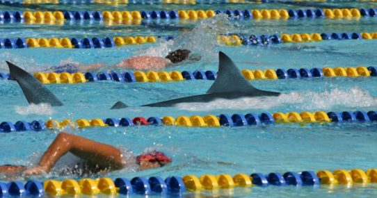 Shark Who Identifies As Female Swimmer Poised To Compete In Summer Olympics