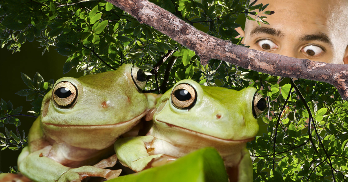With Only One Unfulfilled Conspiracy Theory Left, All Eyes Turn To The Friggin' Frogs