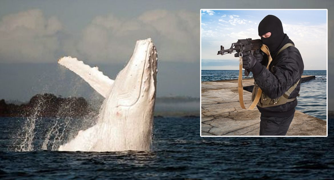 Extremely Rare All-White Humpback Spotted, Immediately Shot By Antifa
