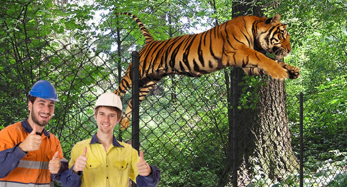 Designers Of Zoo's Tiger Cage Praised After Month Of Only 221 Breakthrough Cases